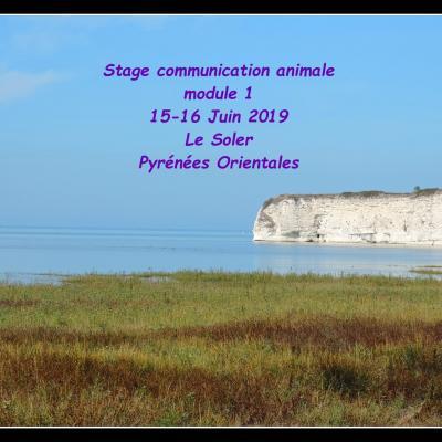 Stage module 1 juin