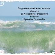 Stage module 1 novembre decembre